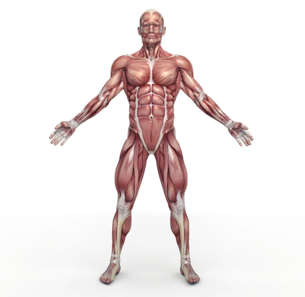 Stütz - und Bewegungssystem Ergotherapie Northeim